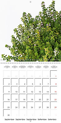 Herbs and Spices in the Kitchen (Wall Calendar 2019 300 × 300 mm Square) - Produktdetailbild 9