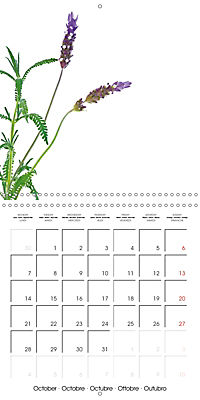Herbs and Spices in the Kitchen (Wall Calendar 2019 300 × 300 mm Square) - Produktdetailbild 10
