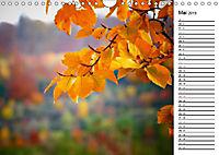 Herbstträume im Taunus (Wandkalender 2019 DIN A4 quer) - Produktdetailbild 5
