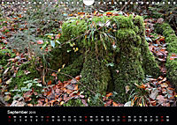 Herbstzauber in der Maisinger Schlucht (Wandkalender 2019 DIN A4 quer) - Produktdetailbild 9
