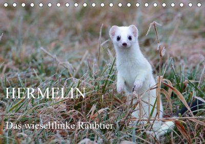 Hermelin - das wieselflinke Raubtier (Tischkalender 2019 DIN A5 quer), Günter Bachmeier