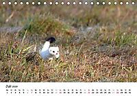 Hermelin - das wieselflinke Raubtier (Tischkalender 2019 DIN A5 quer) - Produktdetailbild 7