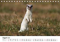 Hermelin - das wieselflinke Raubtier (Tischkalender 2019 DIN A5 quer) - Produktdetailbild 8