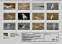Hermelin - das wieselflinke Raubtier (Wandkalender 2019 DIN A2 quer) - Produktdetailbild 13