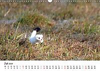 Hermelin - das wieselflinke Raubtier (Wandkalender 2019 DIN A3 quer) - Produktdetailbild 7