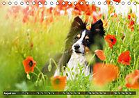 Herzenshunde 2019 (Tischkalender 2019 DIN A5 quer) - Produktdetailbild 8