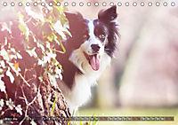 Herzenshunde 2019 (Tischkalender 2019 DIN A5 quer) - Produktdetailbild 3