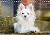 Herzenshunde 2019 (Tischkalender 2019 DIN A5 quer) - Produktdetailbild 7