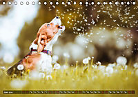 Herzenshunde 2019 (Tischkalender 2019 DIN A5 quer) - Produktdetailbild 6