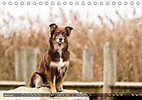 Herzenshunde 2019 (Tischkalender 2019 DIN A5 quer) - Produktdetailbild 4