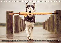 Herzenshunde 2019 (Tischkalender 2019 DIN A5 quer) - Produktdetailbild 9