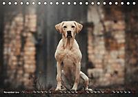 Herzenshunde 2019 (Tischkalender 2019 DIN A5 quer) - Produktdetailbild 11