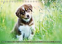 Herzenshunde 2019 (Tischkalender 2019 DIN A5 quer) - Produktdetailbild 10
