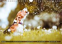 Herzenshunde 2019 (Wandkalender 2019 DIN A4 quer) - Produktdetailbild 6