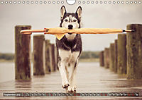 Herzenshunde 2019 (Wandkalender 2019 DIN A4 quer) - Produktdetailbild 9