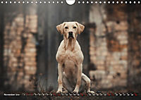 Herzenshunde 2019 (Wandkalender 2019 DIN A4 quer) - Produktdetailbild 11