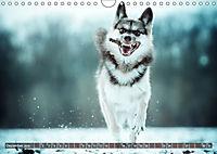 Herzenshunde 2019 (Wandkalender 2019 DIN A4 quer) - Produktdetailbild 12