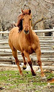 Herzenssache - Ein Pferd für die ganze Familie - Produktdetailbild 1
