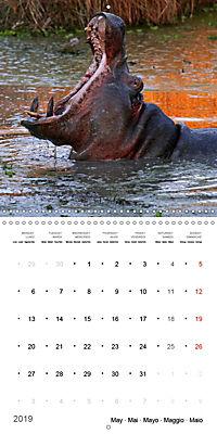 Hippos - African giants (Wall Calendar 2019 300 × 300 mm Square) - Produktdetailbild 5