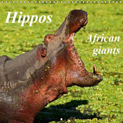 Hippos - African giants (Wall Calendar 2019 300 × 300 mm Square), Wibke Woyke