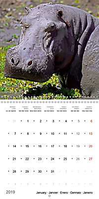 Hippos - African giants (Wall Calendar 2019 300 × 300 mm Square) - Produktdetailbild 1
