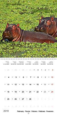 Hippos - African giants (Wall Calendar 2019 300 × 300 mm Square) - Produktdetailbild 2