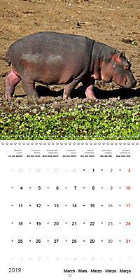 Hippos - African giants (Wall Calendar 2019 300 × 300 mm Square) - Produktdetailbild 3