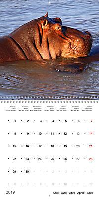 Hippos - African giants (Wall Calendar 2019 300 × 300 mm Square) - Produktdetailbild 4