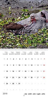 Hippos - African giants (Wall Calendar 2019 300 × 300 mm Square) - Produktdetailbild 7