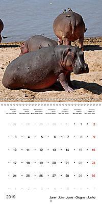 Hippos - African giants (Wall Calendar 2019 300 × 300 mm Square) - Produktdetailbild 6