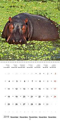Hippos - African giants (Wall Calendar 2019 300 × 300 mm Square) - Produktdetailbild 11