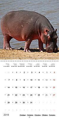 Hippos - African giants (Wall Calendar 2019 300 × 300 mm Square) - Produktdetailbild 10