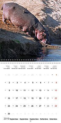 Hippos - African giants (Wall Calendar 2019 300 × 300 mm Square) - Produktdetailbild 9