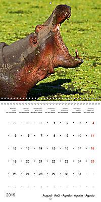 Hippos - African giants (Wall Calendar 2019 300 × 300 mm Square) - Produktdetailbild 8