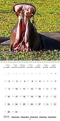 Hippos - African giants (Wall Calendar 2019 300 × 300 mm Square) - Produktdetailbild 12