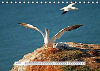 Hochsee-Insel Helgoland (Tischkalender 2019 DIN A5 quer) - Produktdetailbild 6