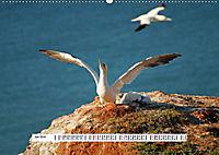 Hochsee-Insel Helgoland (Wandkalender 2019 DIN A2 quer) - Produktdetailbild 6