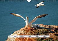 Hochsee-Insel Helgoland (Wandkalender 2019 DIN A4 quer) - Produktdetailbild 6