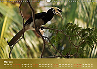 Hornbills from Southeastern Asia (Wall Calendar 2019 DIN A3 Landscape) - Produktdetailbild 5