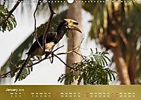 Hornbills from Southeastern Asia (Wall Calendar 2019 DIN A3 Landscape) - Produktdetailbild 1