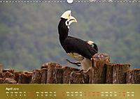 Hornbills from Southeastern Asia (Wall Calendar 2019 DIN A3 Landscape) - Produktdetailbild 4