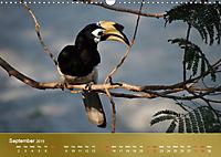 Hornbills from Southeastern Asia (Wall Calendar 2019 DIN A3 Landscape) - Produktdetailbild 9