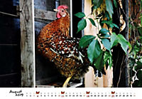 Hühner 2019 - Produktdetailbild 8