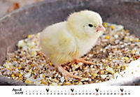 Hühner 2019 - Produktdetailbild 4