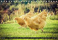 Hühner in meinem Garten (Tischkalender 2019 DIN A5 quer) - Produktdetailbild 7