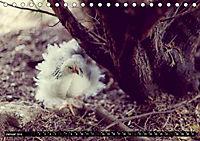 Hühner in meinem Garten (Tischkalender 2019 DIN A5 quer) - Produktdetailbild 1
