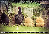Hühner in meinem Garten (Tischkalender 2019 DIN A5 quer) - Produktdetailbild 3