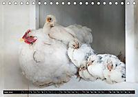 Hühner in meinem Garten (Tischkalender 2019 DIN A5 quer) - Produktdetailbild 6