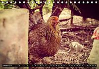 Hühner in meinem Garten (Tischkalender 2019 DIN A5 quer) - Produktdetailbild 10