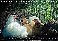 Hühner in meinem Garten (Tischkalender 2019 DIN A5 quer) - Produktdetailbild 8